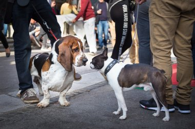 Two dogs greeting each other by sniffing.
