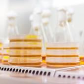 Petriho misky v laminárním prouděním