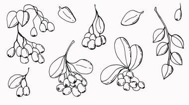 Berries graphic set. Line art. White background, isolator. Stock illustration. icon