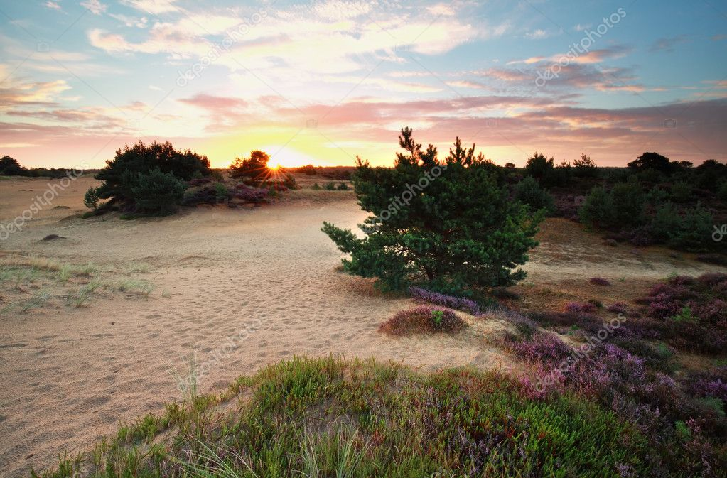 summer sunrise over dunes with wildflowers