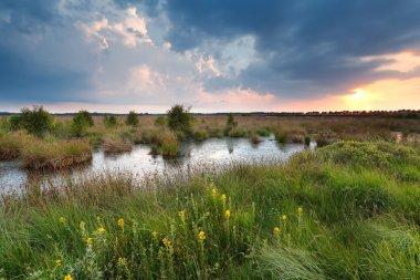 sunset over swamp in summer