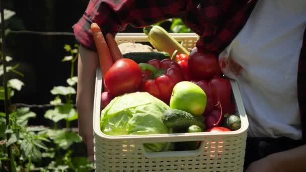 Szekrény videó női cipelő doboz tele érett organikus zöldségek. A kisvállalkozás fogalma és az ökológiai zöldségek termesztése a kertben
