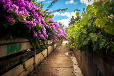 road grown with bushes and Bougainvillea