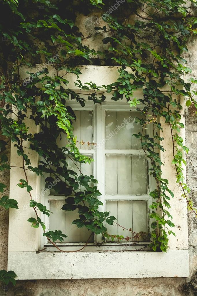 old window overgrown with green ivy