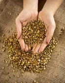 Fotografie Conceptual shot of handful of golden nuggets