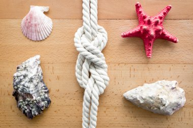 Closeup of seashells, starfish and knot from sailing travels