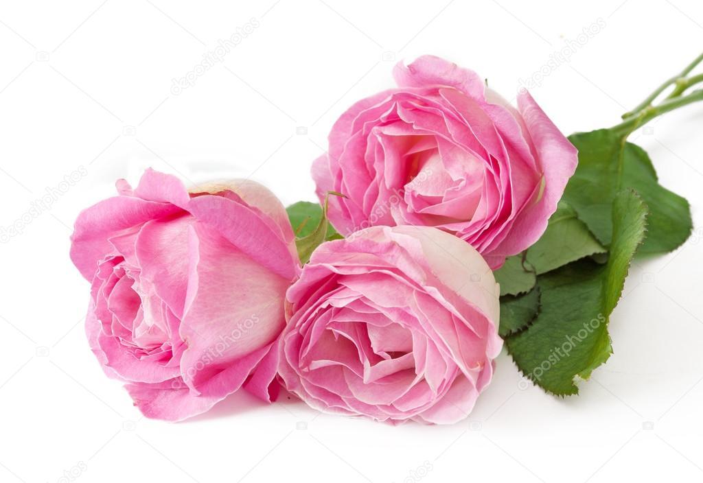 Rose Blumen Bund isolierten auf weißen Hintergrund — Stockfoto ...