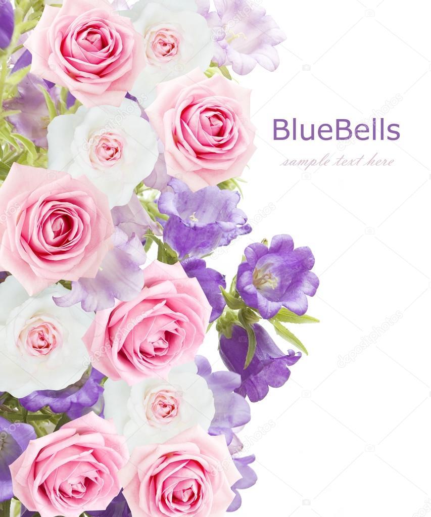 Bluebells flowers and roses wedding background isolated on white with sample text