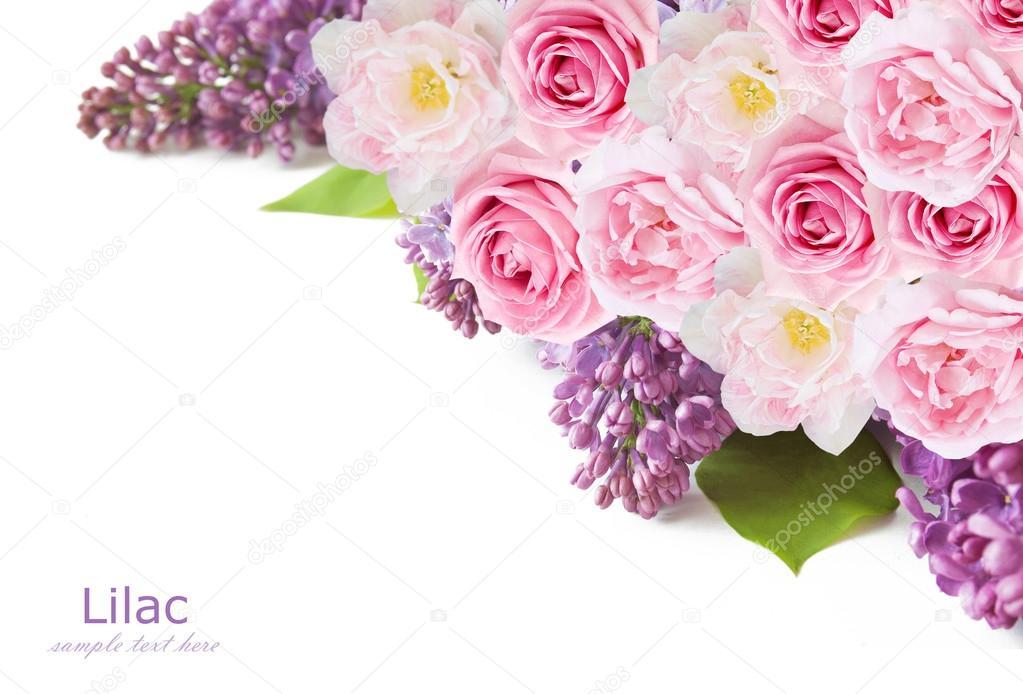 Flieder, Tulpen und rosa Blumen hintergrund isoliert auf weiss mit ...