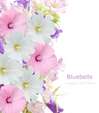 Bluebell flowers background isolated on white with sample text