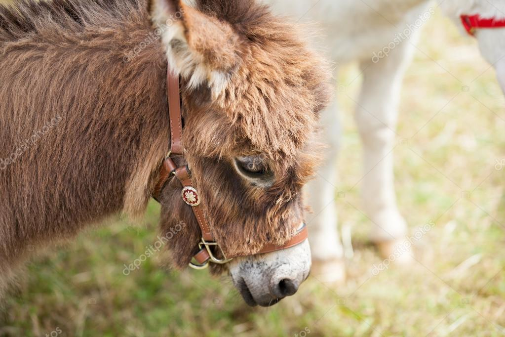 Cute little donkey