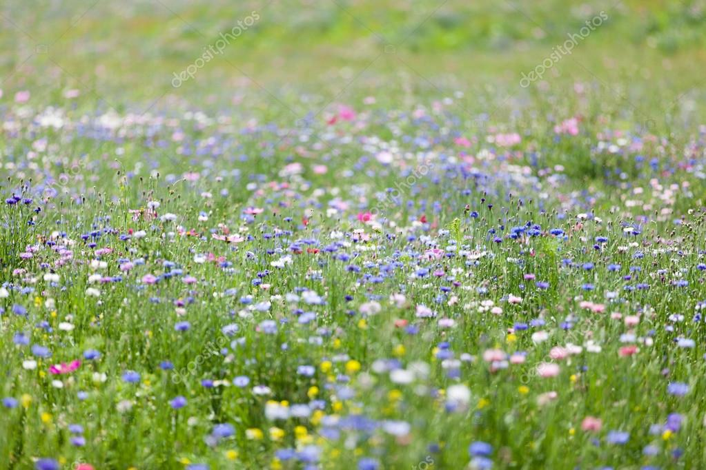 Colorful flower meadow