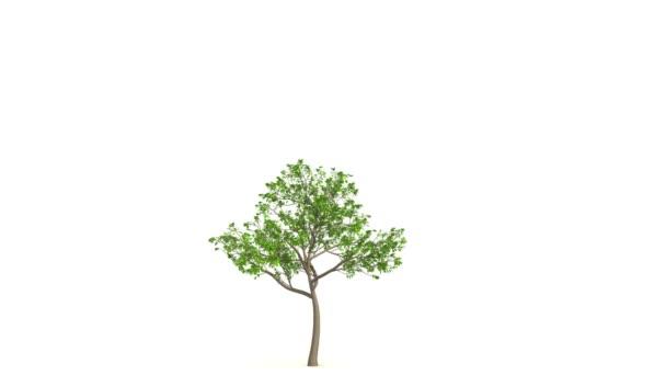Růst velkých zelených stromů. Černá a bílá maska