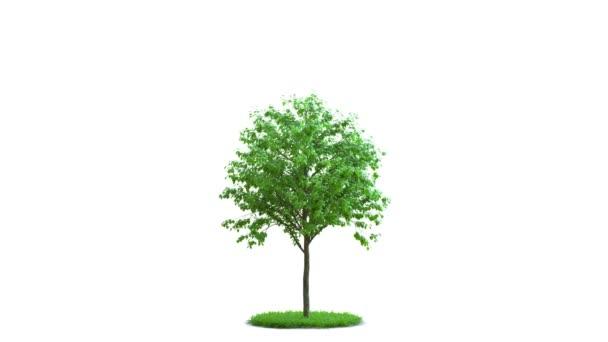 Strom růst na kulaté zelené trávě. Ideální izolace. Na bílé a černé pozadí s černou a bílou maskou