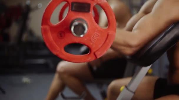 Biceps curls with barbell. Loop