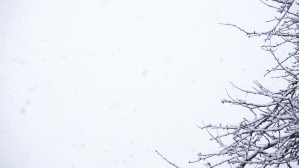 Schnee am Himmel mit Ästen