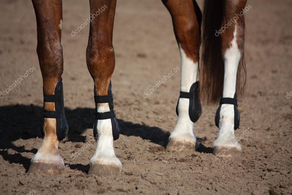 Cerca de las patas del caballo con botas de protecci n - Precio de somier con patas ...