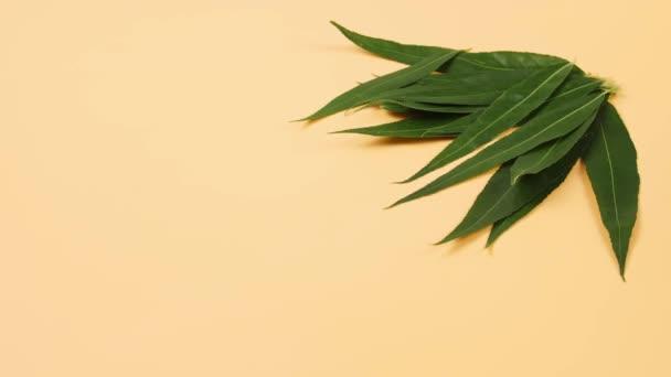 Grüne osier Blätter auf farbigem Hintergrund