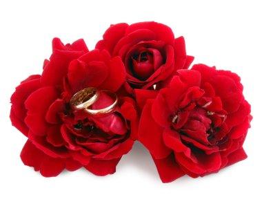 Wedding rings on scarlet roses, macro