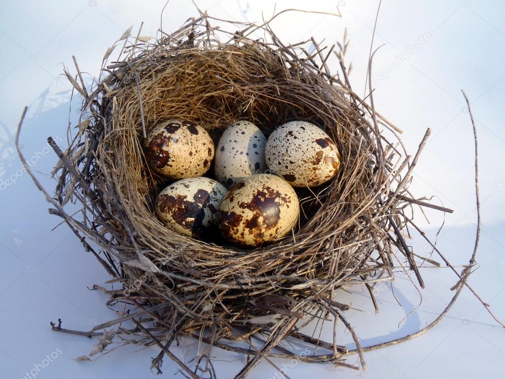 Quail eggs in a nest on a light background close up.