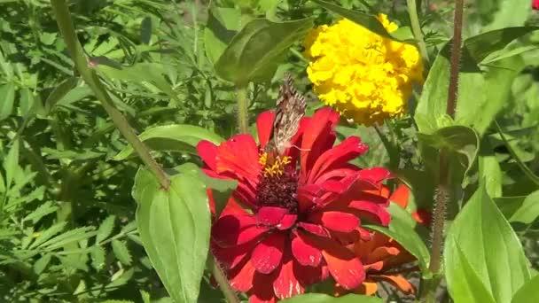 motýl na červený květ