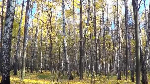 Různé pohledy na podzim
