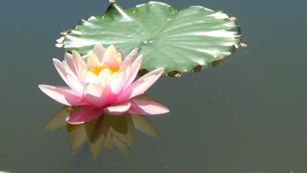 Různé květiny růžové barvy