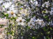 Malý jarní květ květiny