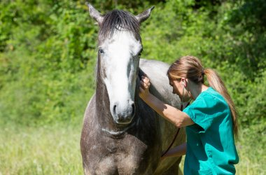 Equine veterinary