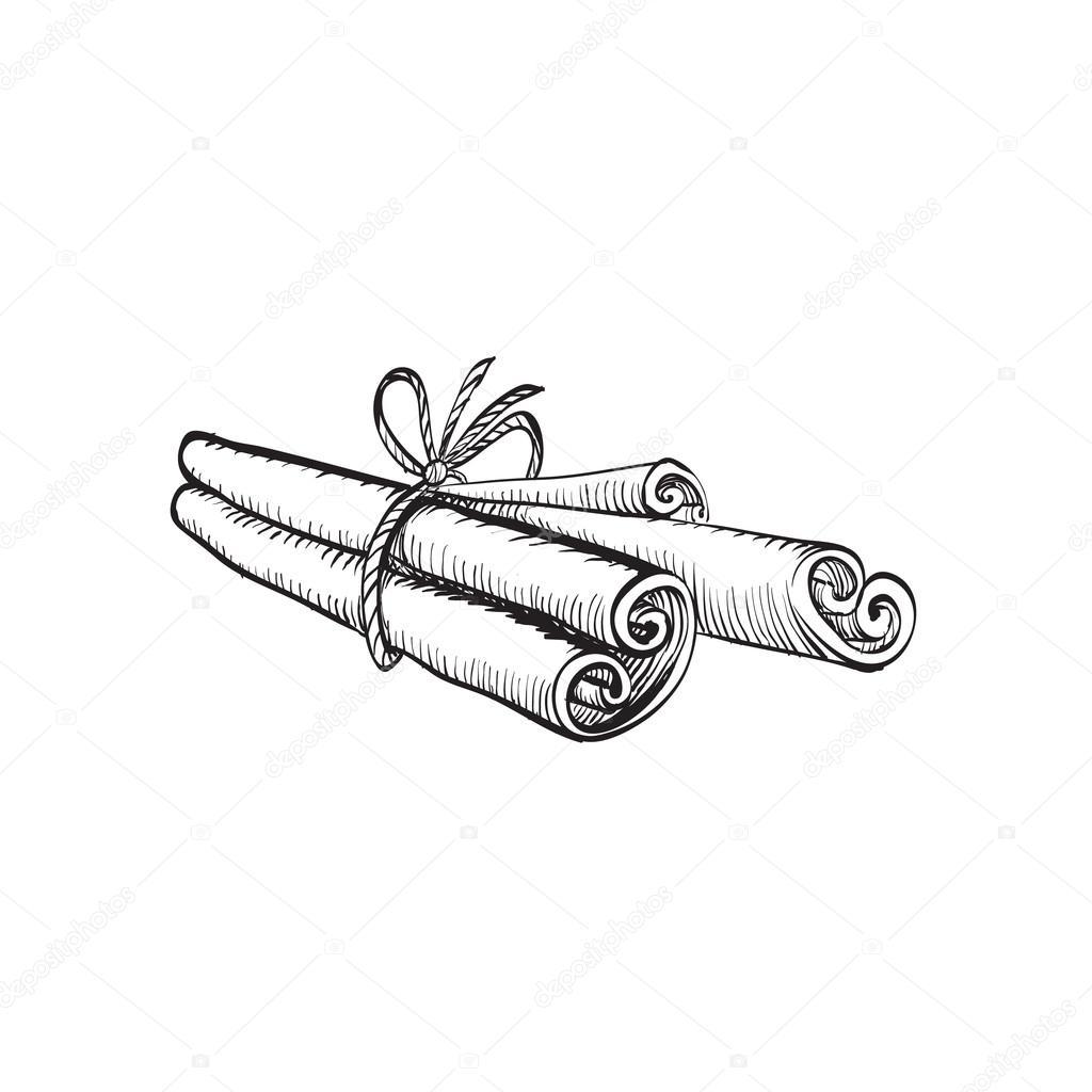 Cannelle Dessin à L Encre Brosse Vecteur Isolé Image