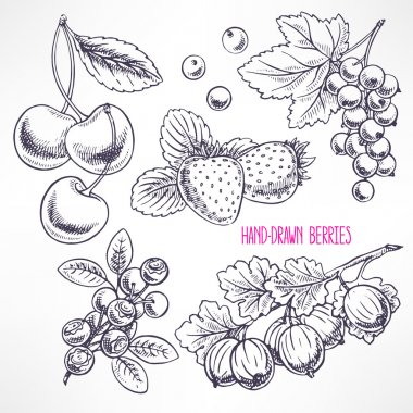 set with different sketch berries