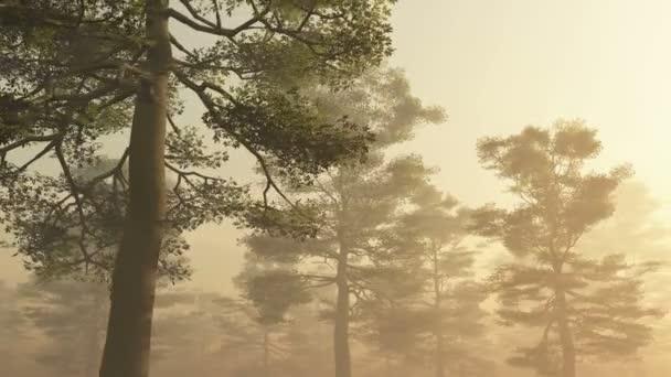 ranní Les v mlze