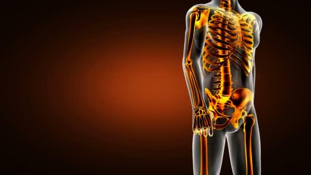 opakovat lidské kosti RTG kontroly. zdravotní záznam