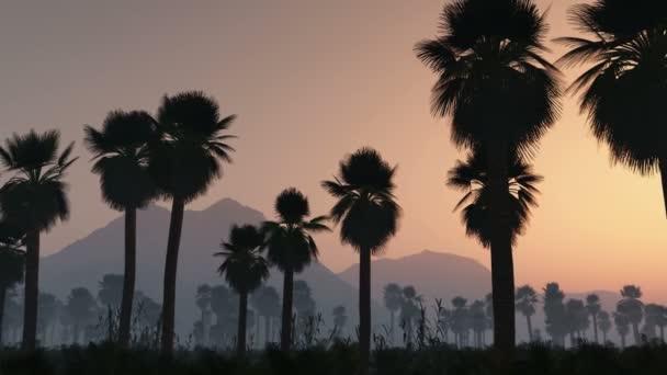 Fog, zářící slunce a dlaně