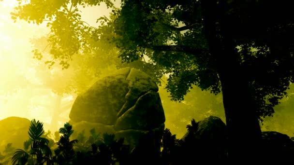 krásné ráno s paprsků zářící skrze stromy