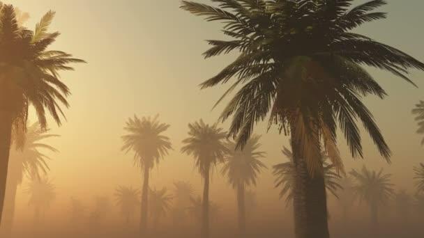 köd-ragyogó nap és pálmák