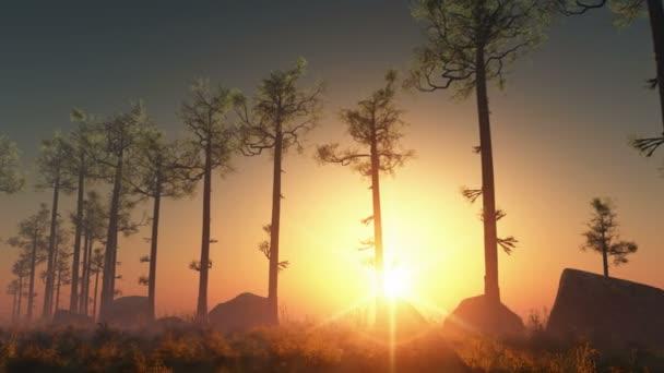západ slunce v borovém lese s paprsky světla
