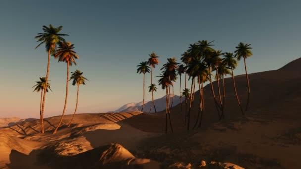 palmy v poušti při západu slunce