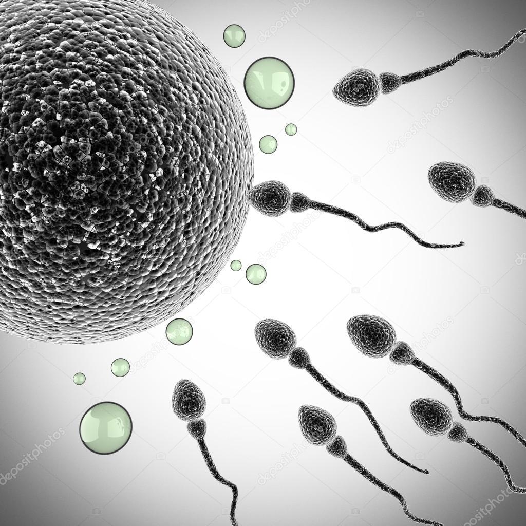 Spermium Größe