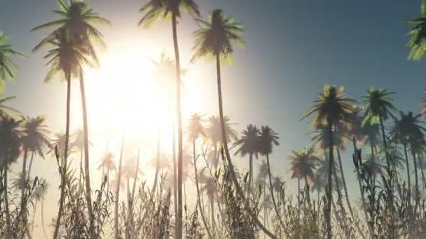 Strahlende Sonne und Palmen Bäume