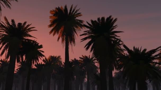 tropické džungle pozadí