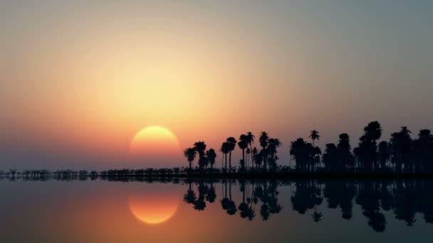 Trópusi dzsungel háttérben palm tree sziluettek a naplemente