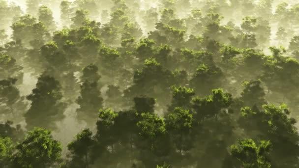 reggeli köd a sűrű, trópusi esőerdő. légi