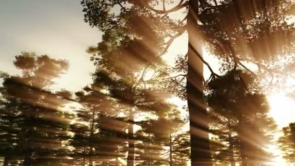A beautiful morning with sunrays shining through the forest trees
