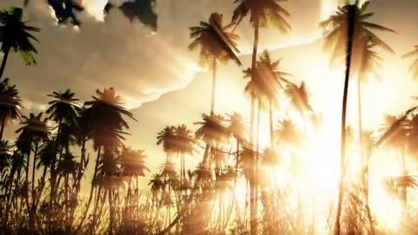 Tropické džungle pozadí s palm tree siluety při západu slunce