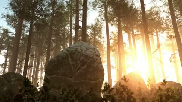 Krásné ráno s paprsků zářící skrze lesních stromů