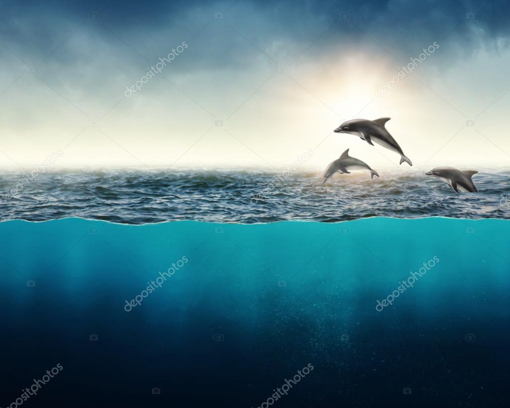 Abstract background with dolphins