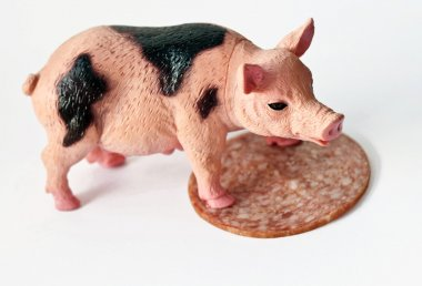 Miniature Pig with a slice of saussage