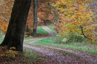 Magic Ravnsholt Skov forest
