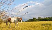 Koně v Dánsku a modré nebe